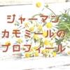 ジャーマンカモミール(キク科)のプロフィール