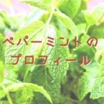ペパーミント(シソ科)のプロフィール